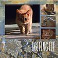 Instinctif